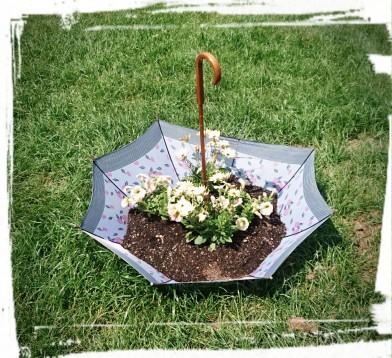 Hier wachsen die Blumen auch im Regenschirm...